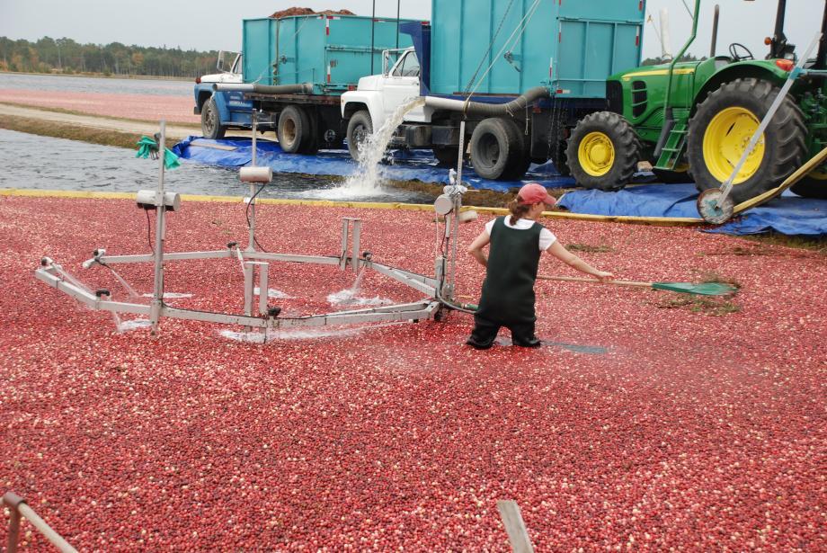 Cranberry Farm Tour